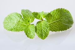 Fresh peppermint leaves Royalty Free Stock Photography