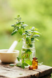 Fresh peppermint and peppermint oil. Fresh peppermint and peppermint oil on wooden background outdoors royalty free stock image