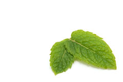 Fresh Peppermint on white Stock Photo