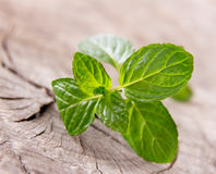 Fresh peppermint. On wooden table Stock Image