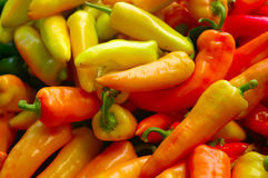 Fresh peppers Royalty Free Stock Photo
