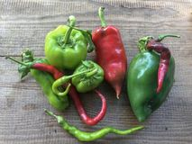 Fresh peppers collected for food. stock image