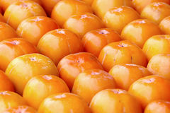 Fresh persimmons Royalty Free Stock Images