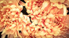 Fresh petals beautiful colorful vintage flowers background stock photo