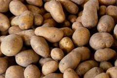Fresh Pick Potatoes at Farmers Market Royalty Free Stock Photography
