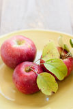 Fresh picked apples on a plate. 3 orchard fresh apples straight from the tree rest on a green plate on a gray farmhouse table Royalty Free Stock Images
