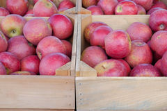 Fresh picked apples in various wooden crates at a local farm sta Stock Image
