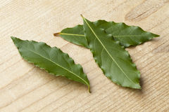 Fresh picked bay leaves Royalty Free Stock Image
