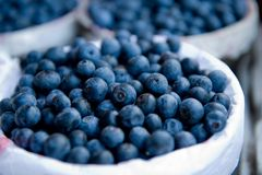 Fresh picked blueberries Stock Photos