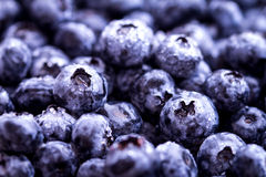 Fresh picked blueberries in the basket. Closeup fresh picked blueberries in the basket Stock Photography