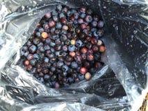 Fresh picked blueberries Stock Photos