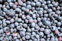 Fresh Picked Blueberries Stock Image
