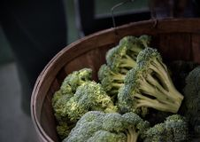 Fresh picked broccoli in a basket Royalty Free Stock Photos
