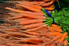 Fresh Picked Carrots Stock Image
