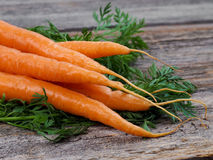 Fresh picked carrots stock photo