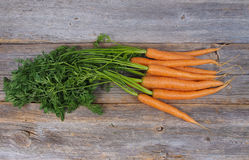 Fresh picked carrots Royalty Free Stock Images