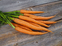 Fresh picked carrots stock images