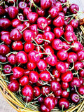 Fresh picked cherries Royalty Free Stock Photography