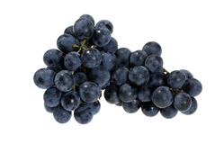 Fresh picked concord grapes. Isolated fresh picked concord grapes on white background royalty free stock photography