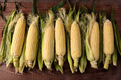 Fresh Picked Corn on the Cob Royalty Free Stock Photography