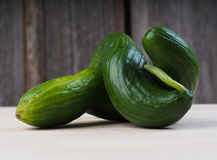 Fresh picked cucumber stock photos