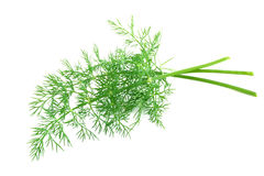 Fresh-picked dill Royalty Free Stock Image