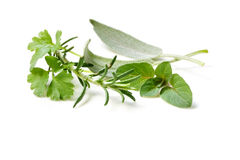 Fresh-picked Herbs stock images