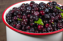 Fresh picked huckleberries in a pot Royalty Free Stock Photos