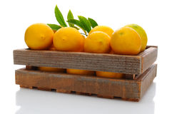 Fresh Picked Lemons in Crate Stock Photography