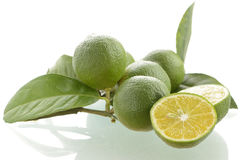 Fresh Picked Limes Stock Photo
