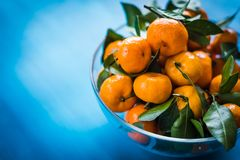 mandarins in a bowl on a blue background stock image