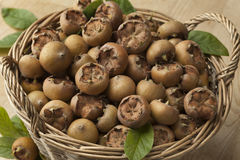 Fresh picked medlars Royalty Free Stock Images