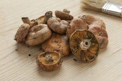 Fresh picked milk-caps mushrooms Royalty Free Stock Photos