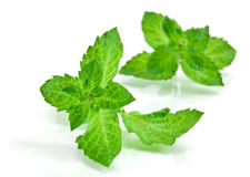 Fresh-picked mint leaves Stock Photo