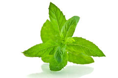 Fresh-picked mint leaves Royalty Free Stock Photos
