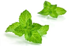Fresh-picked mint leaves Stock Image