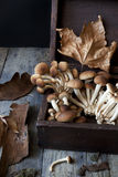 Fresh picked mushrooms on old wooden box on rustic table Royalty Free Stock Images