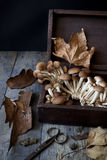 Fresh picked mushrooms on old wooden box on rustic table with scissor Royalty Free Stock Photo