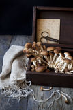 Fresh picked mushrooms on old wooden box on rustic table with scissor Stock Image