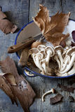Fresh picked mushrooms on vintage plate on rustic table with knives and leaves Stock Photography