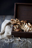 Fresh picked mushrooms on vintage wooden box on rustic table Stock Image