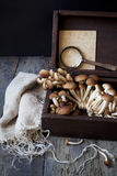 Fresh picked mushrooms on vintage wooden box on rustic table with notes and magnifying glass Royalty Free Stock Photos