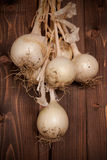 FRESH-PICKED ONIONS Royalty Free Stock Photo