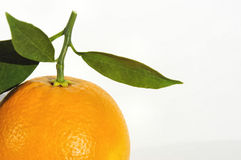 Fresh picked orange Royalty Free Stock Photography