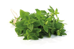 Fresh-picked oregano. Herb bunch, straight from the herb garden, isolated on white Stock Images
