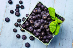 Fresh picked organic blueberries. Blue paper carton full of fresh organic blueberries garnished with mint leaves on blue wood background Royalty Free Stock Photo