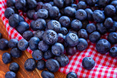 Fresh picked organic blueberries Stock Images
