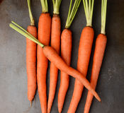 Fresh Picked Organic Carrots Stock Image