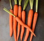 Fresh Picked Organic Carrots Stock Image