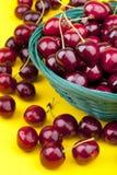 Fresh picked organic cherries Stock Photo